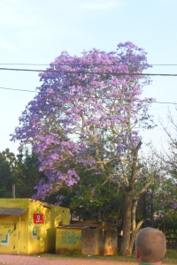 Even when there's trash in the streets, Namaacha is still beautiful with trees and flowers in bloom.
